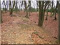 SP9102 : South Heath: Redding Wick Moat by Nigel Cox