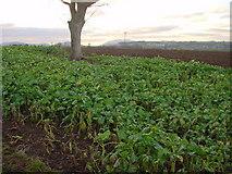 NY5027 : Farmland at Tirril by Bob Jenkins