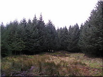 NS3363 : Sitka Spruce by Chris Court