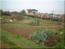 ST4676 : Beach Hill Allotments by Adrian and Janet Quantock