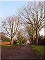 ST5576 : Cheyne Road, Stoke Bishop by Linda Bailey