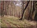SU7795 : East Wood by David Ellis