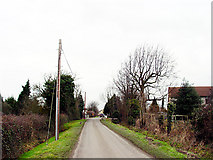 ST5682 : Road by Brook Farm by Linda Bailey