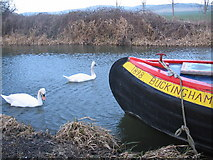 SU0762 : Swans on the Kennet & Avon by Phil Williams
