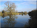 SP4509 : River Thames: Downstream of Swinford Bridge by Nigel Cox