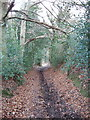 TQ0193 : Old Shire Lane beside Newland Park, Chalfont St Giles by David Hawgood