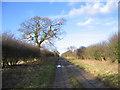 TF8223 : Farm track, Weasenham All Saints, Norfolk by Rodney Burton