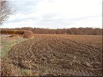 TQ0199 : Ploughed field near Chenies by David Hawgood