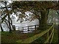 SJ7456 : Haslington Hall - the drive and lake by Mike Harris