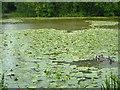 ST6462 : Hunstrete Lake by Derek Harper