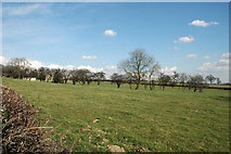 SE2909 : Old hedge south of Kexbrough by Chris Yeates