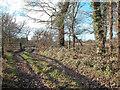 SJ3374 : Near Craxton Wood Hotel by Dennis Turner