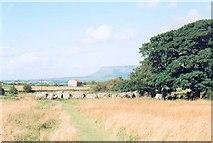 G6634 : Carrowmore megalithic cemetery by Gordon Hatton