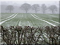 SE2844 : Snowy fields at Ingfield Farm by Derek Parkinson