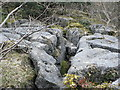 SD4879 : Limestone Pavement  on Whin Scar by John Berry
