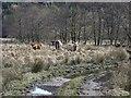 NN1904 : Cattle beside the River Goil by Richard Webb