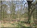 SP6839 : Stowe: Woodland near Charmandean School by Nigel Cox