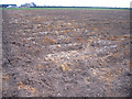 TL2593 : Peat wastage, Black Bush, Whittlesey, Cambs by Rodney Burton