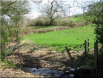 SY3496 : Farmland and stream near Monkton Wylde by Maurice D Budden