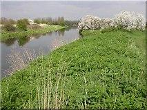 SP8461 : Nene River by Kokai