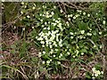 TL0667 : Primroses in the Ditch by Kokai