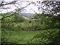 SD4693 : Farmland Underbarrow by Michael Graham