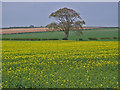 TA0665 : North of Kilham by Stephen Horncastle