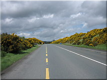 M9457 : Gorse on the N61. by Brian Shaw
