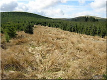 NS6583 : Clearing in Carron Valley Forest by Iain Thompson