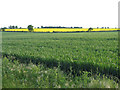 TL0840 : Farmland from Great Lane, Haynes, Beds by Rodney Burton