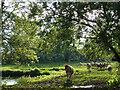 SU6957 : Farmland near Hartley Wespall by Andrew Smith