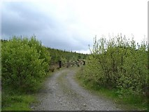 SJ0254 : Clocaenog forest by Dot Potter