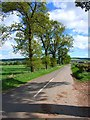 NO2541 : Tree-lined road from Ardler to Keillor by Oliver Dixon