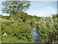 SJ6763 : Footpath alongside the River Weaver by Ian Warburton
