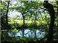 SJ3378 : Pond on Street Hey Lane, Willaston by Sue Adair