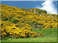 NY4222 : Gorse Bank. by Bob Danylec