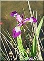 SP9832 : Purple Iris by Rob Farrow