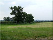 SJ5646 : Trees in a field by Nigel Williams