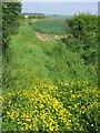 SE9559 : Bridleway at SE953593 by Stephen Horncastle