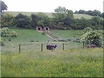 SP9504 : Ostrich farm, Chesham Vale by David Hawgood