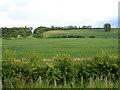 TL0641 : Wilstead Hill, Haynes, Beds by Rodney Burton