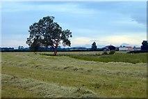SJ6160 : New Farm, Calveley by Mike Harris