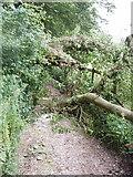 SP9504 : Fallen tree blocking track, Chesham Vale by David Hawgood