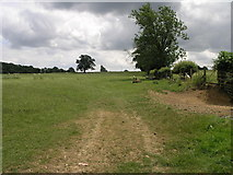SP6547 : Bridleway to Handley by Michael Patterson
