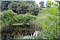 SJ5764 : Pond beside footpath, Rushton by Mike Harris