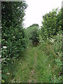 SW6331 : Footpath near Nancegollan by Sheila Russell