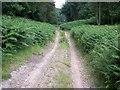 SU9587 : Woodland Track by Balraj Gill