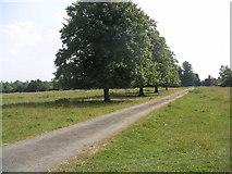 SP8137 : Shenley Hill Farm Paddock by Mr Biz