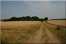TL9570 : Track off Walsham Road by Bob Jones