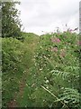 ST5861 : Pathway to Knowle Hill by Sharon Loxton